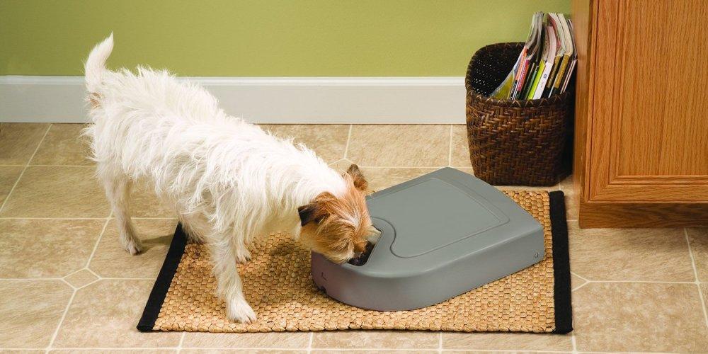 PetSafe's best selling feeder-sale-01