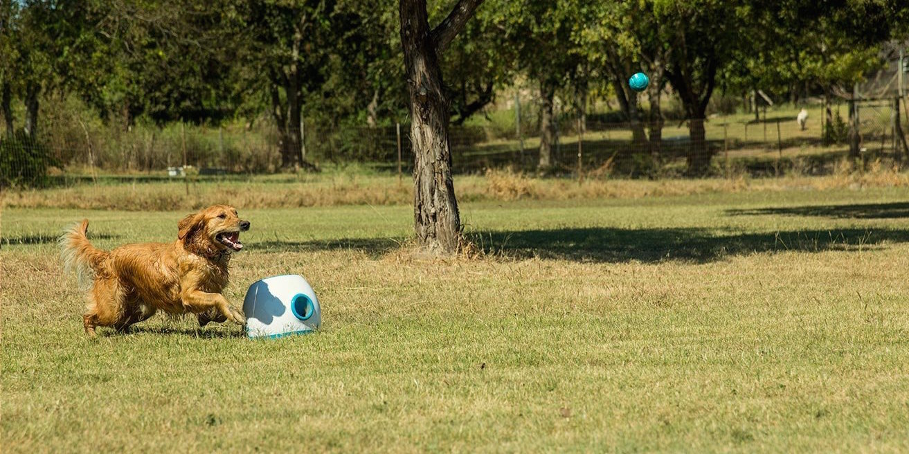 ifetch-interactive-mini-balllauncher-for-dogs
