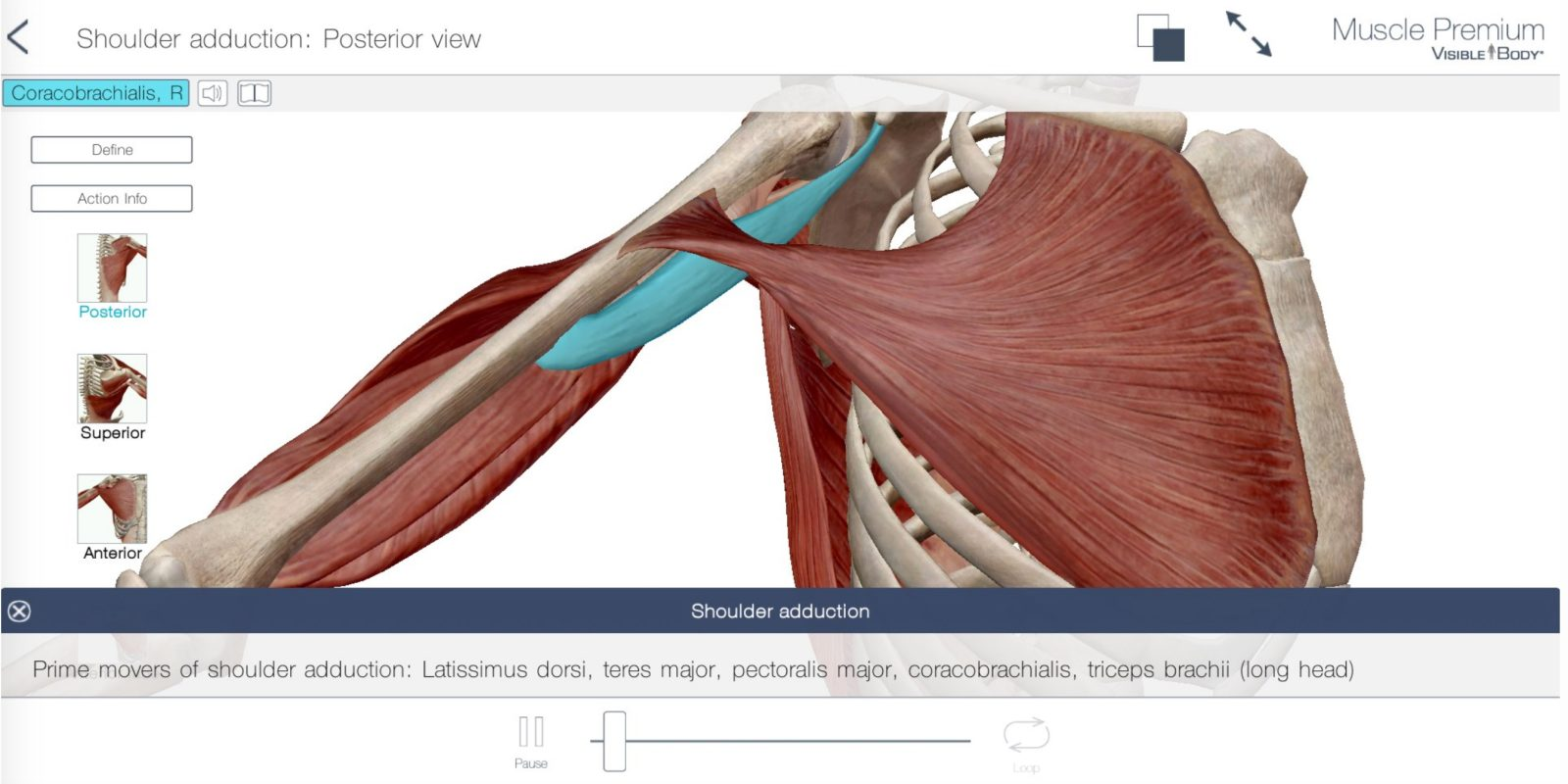 Muscle Premium Human Anatomy Kinesiology Bones For Ios Hits All