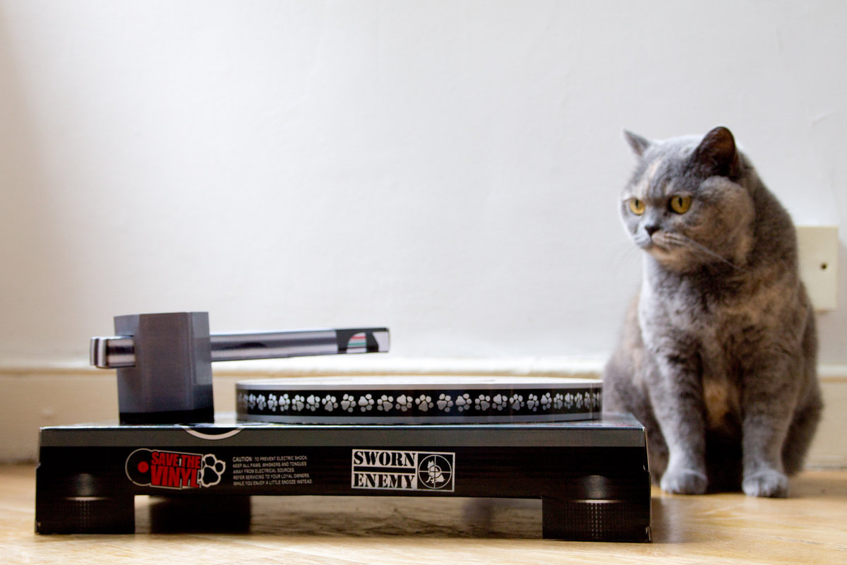 suck uk cat dj