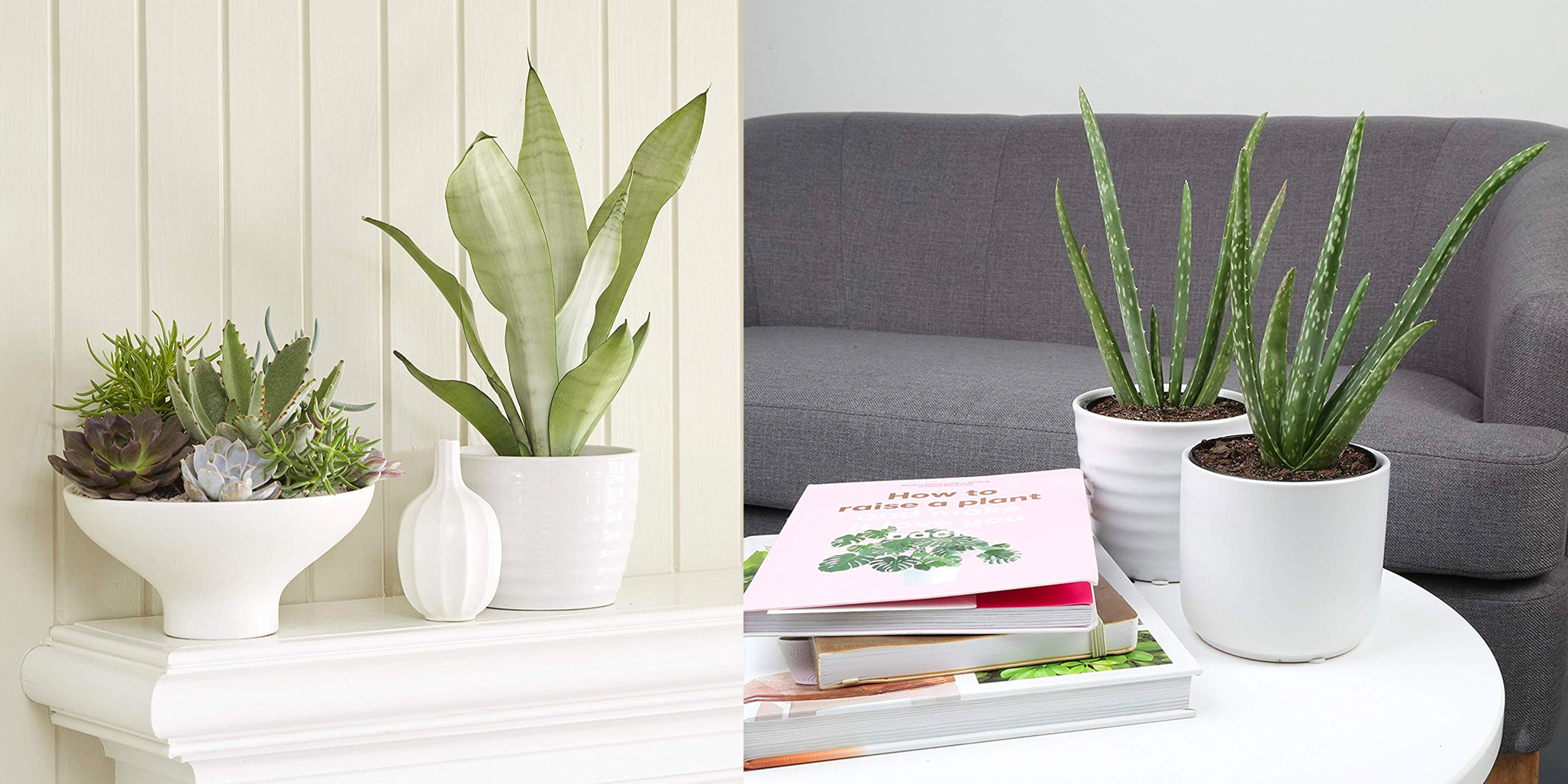 Amazons Gold Box Offers Deals On Indoor Plants To Freshen