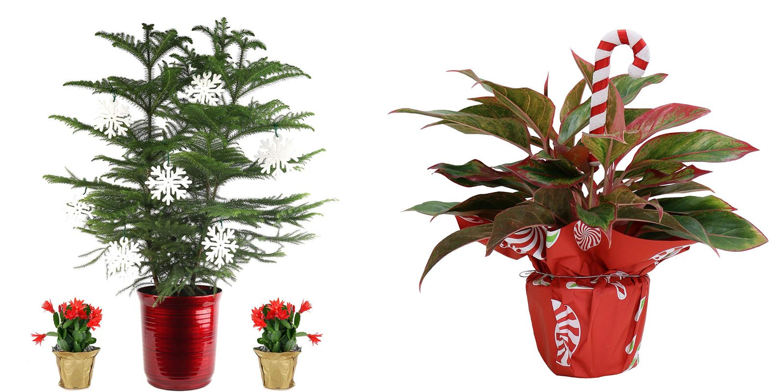 Indoor Plants From 20 At Amazon Today Mini Christmas Tree