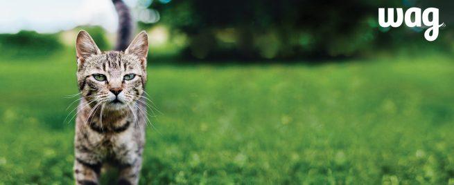 wag pet food cat