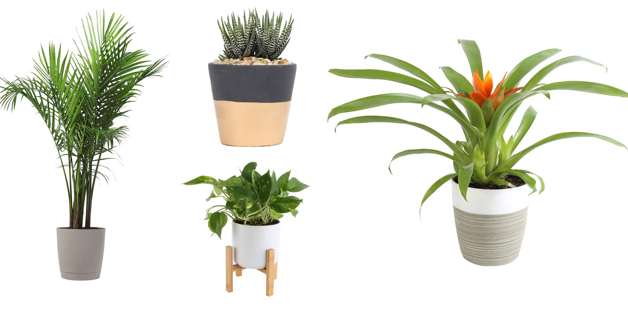 Amazon 1-day Costa Farms Plant Sale from $16: succulents, palms, bamboo, more (25% off)