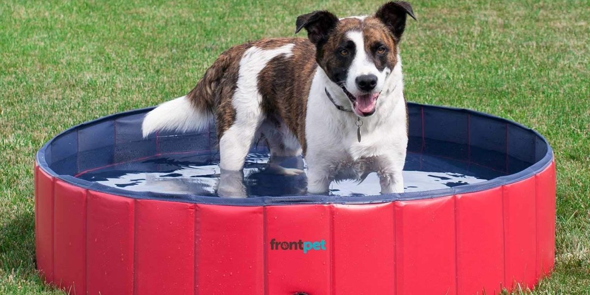 keeping pets cool this summer with a pool