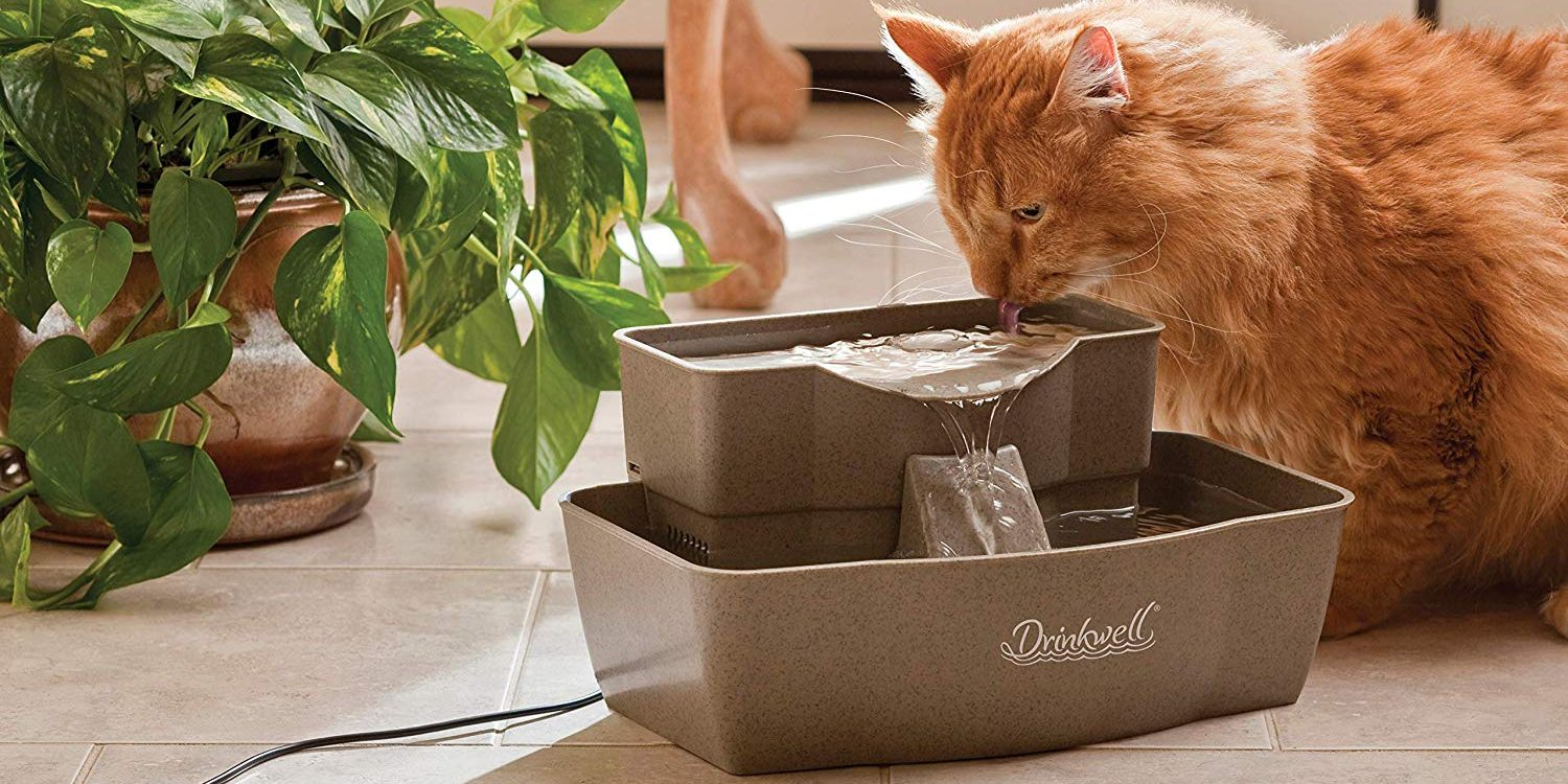 keeping pets cool this summer with a fountain