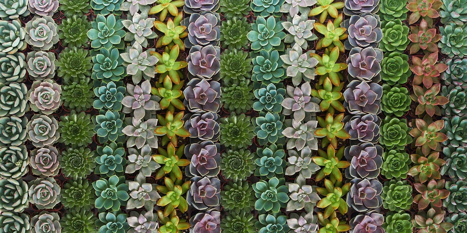 You need more succulents, this 32-pack is now $45 shipped (Reg. $64)