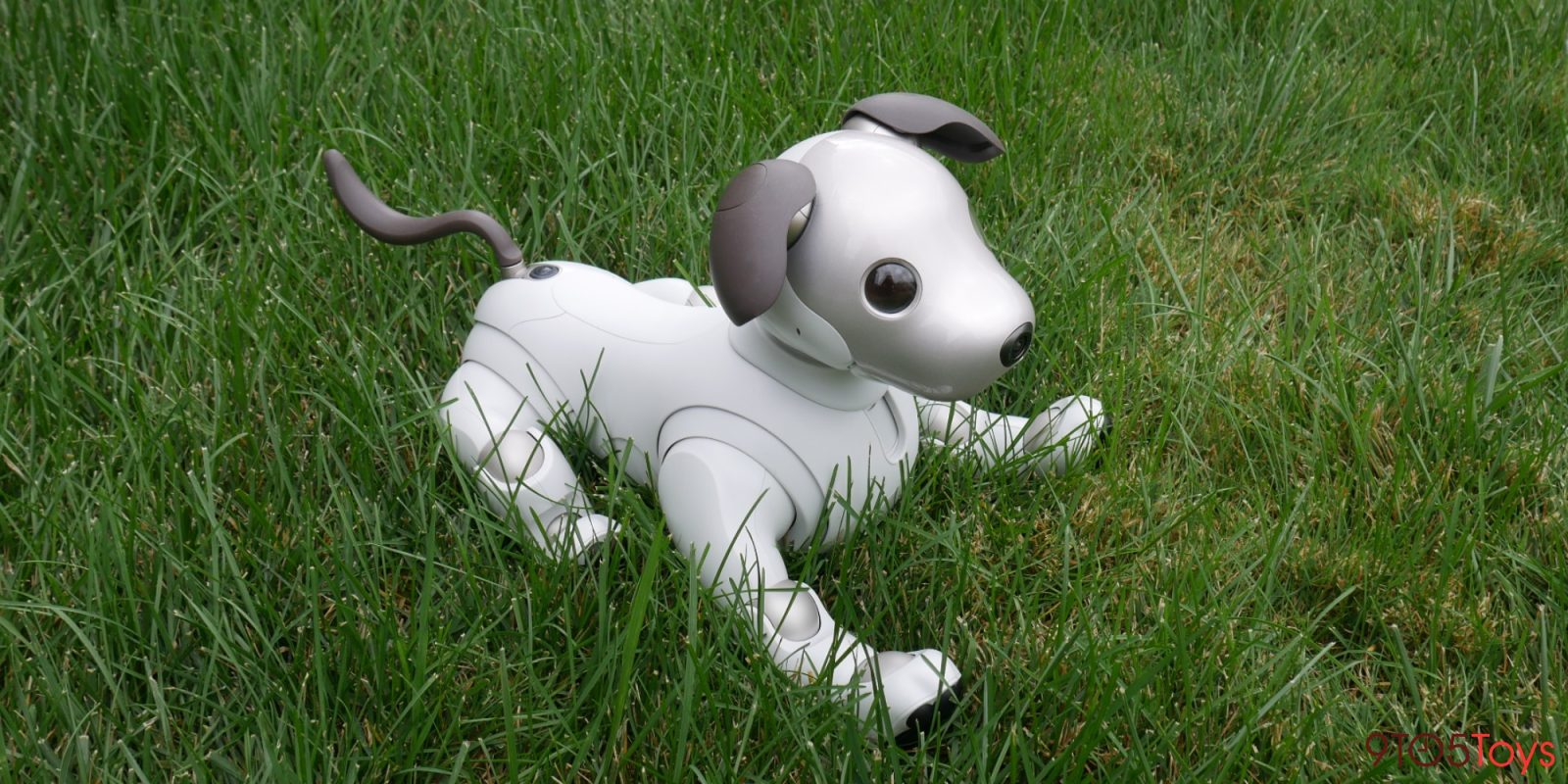 Hands-on with Sony aibo: A glimpse into the future of robotic companions