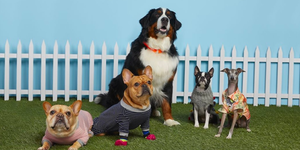 The Nordstrom Pet Pop-Up Shop is live with hundreds of - 9to5Toys
