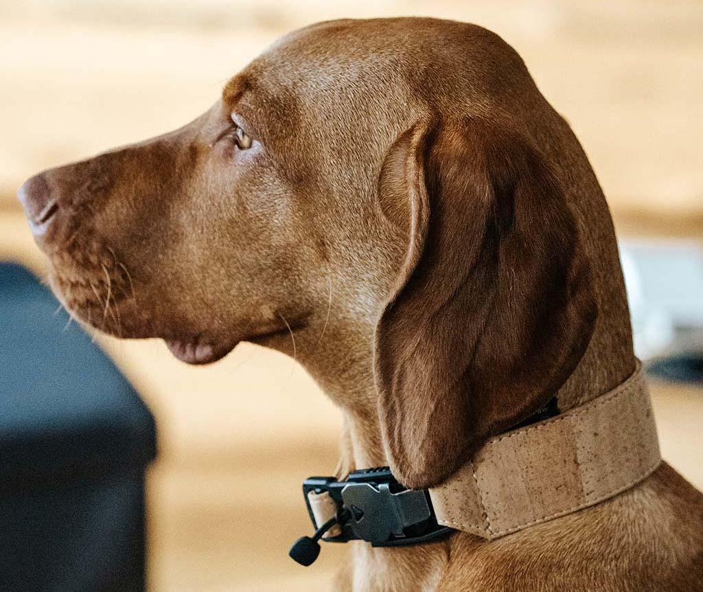 FollowPaw AirTag dog collar new